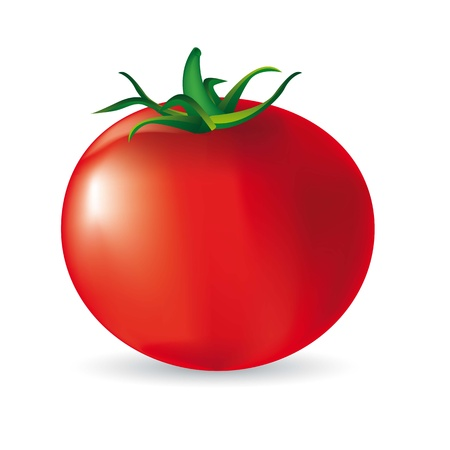 greengrocer: red tomato with shadow over white background. vector illustration Illustration