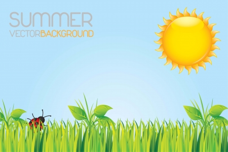 beautiful garden with a sunny summer day Vector