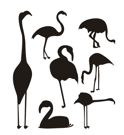 flamingo over white background, animal. vector illustration Vector