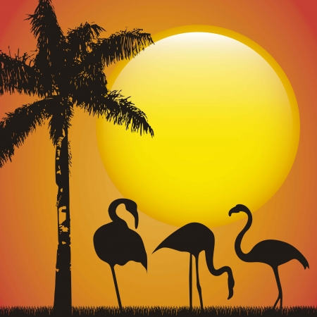 flamingo over late afternoon background, animal. vector illustration Vector