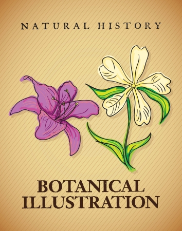 naturism: Illustration Of Natural History ( Vintage Flowers Icons). Vector illustration