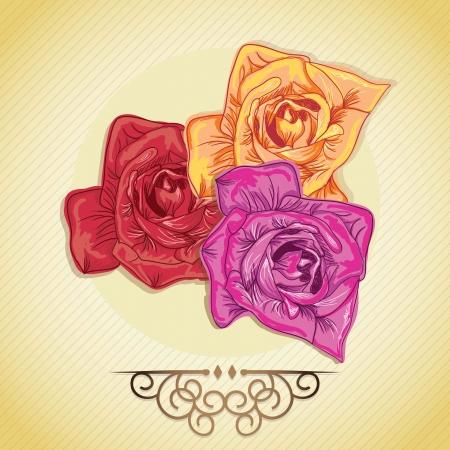 naturism: Flowers set (3 Roses), on vintage background. Vector illustration Illustration
