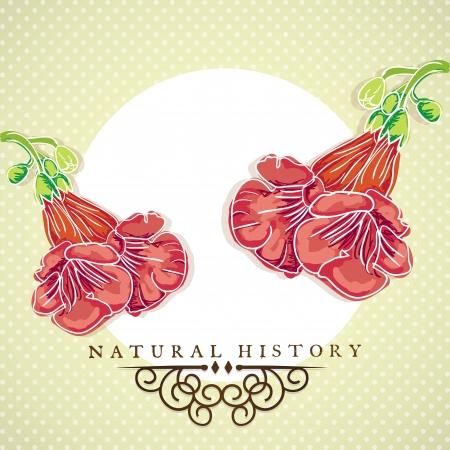 naturism: Red Flowers set, on vintage background. Vector illustration