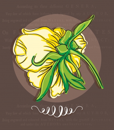 naturism: White flower, on brown background. Vector illustration