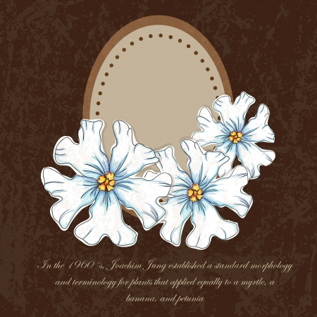 naturism: White flowers set, on brown background. Vector illustration