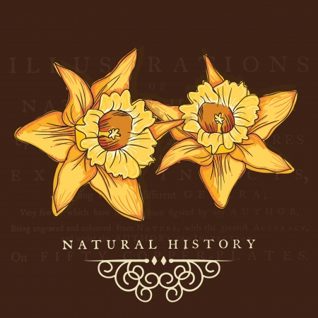 naturism: Yellow flowers set, on brown background. Vector illustration