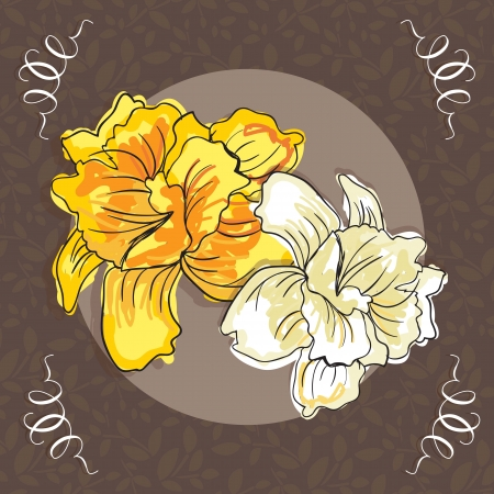 naturism: Beautiful  Yellow and white Flower, On brown Background. Vector