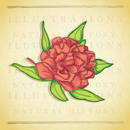 naturism: Beautiful  Red Flower, On vintage Background. Vector