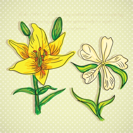 naturism: Beautiful  Yellow and white Flower, On vintage Background. Vector