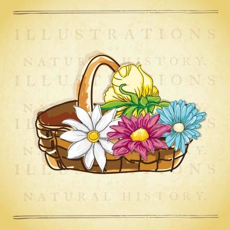 naturism: Basket with flowers, On vintage background. Vector Illustration