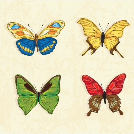 vectro: Butterfly Icons ( collection set ) , on vintage background. Vectro Illustration