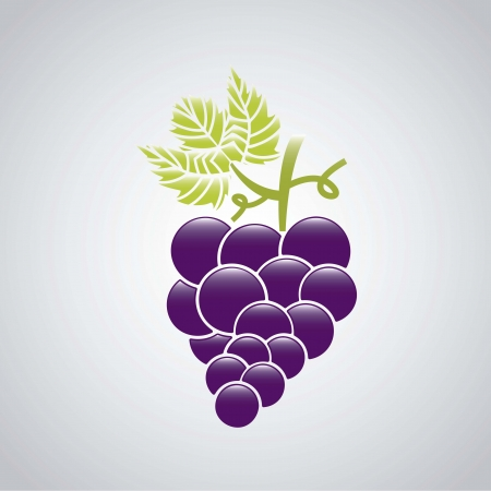 grape fruit over gray background. vector illustration Vector