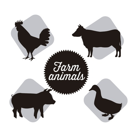 cock duck: farm animals over white background. vector illustration