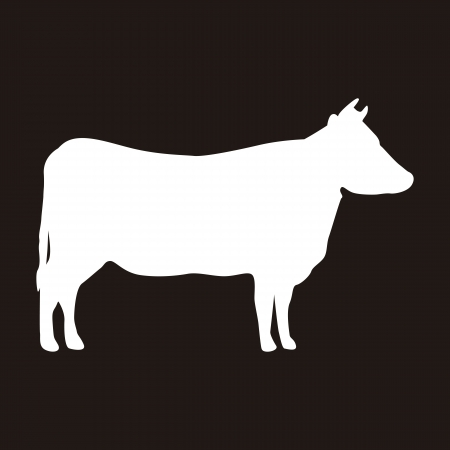 cow illustration: silhouette cow over black background. vector illustration Illustration
