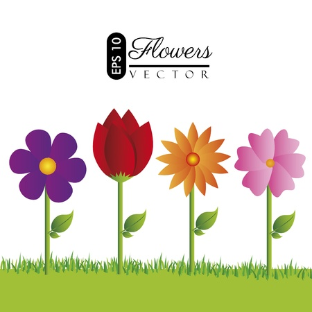 flowers design over white background illustration  Vector