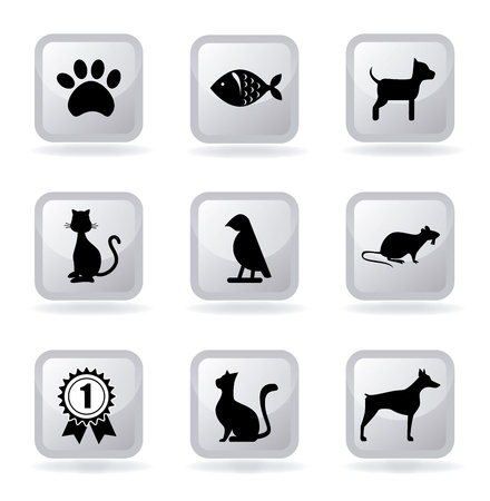 pets icons over white background vector illustration  Vector