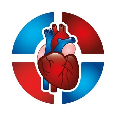 cardioid: dise�o de cardiolog�a m�s de fondo blanco Vectores