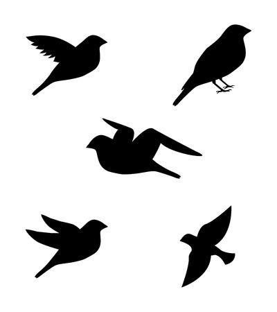 birds in flight: birds pattern over white background vector illustration