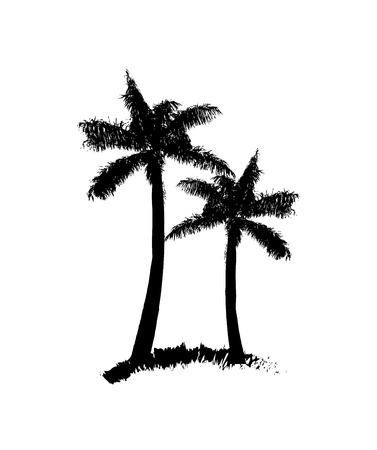 palm tree illustration over white background. vector illustration  Vector