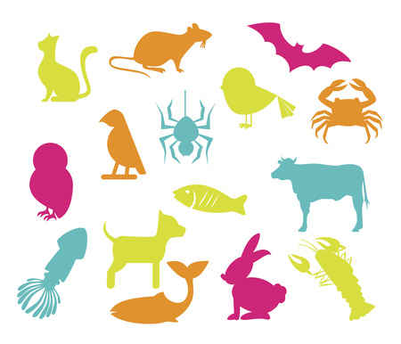 pets  design over white  background vector illustration   Vector