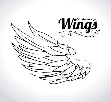 bird wings: Wings design over white background illustration