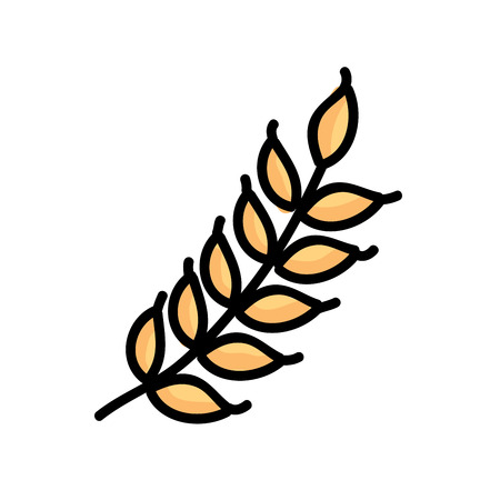 grain field: wheat graphic design. Vector illustration.