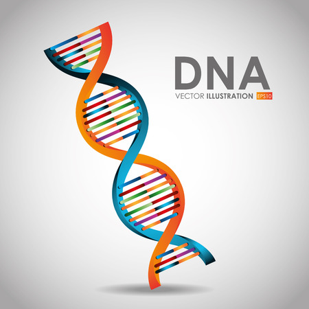 human chromosomes: DNA design, vector illustration. Illustration