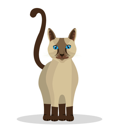 cat: Pet design over white background, vector illustration. Illustration