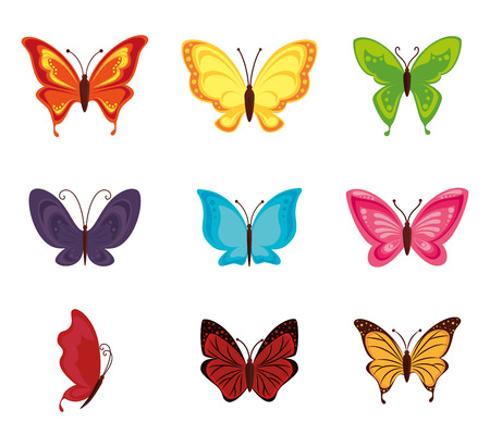 Butterfly design over white background, vector illustration.