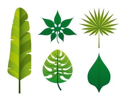 tropical nature design, vector illustration graphic