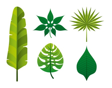 leafs: tropical nature design, vector illustration graphic