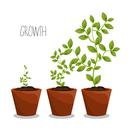 vase of flowers: Nature plants growth graphic design, vector illustration eps10