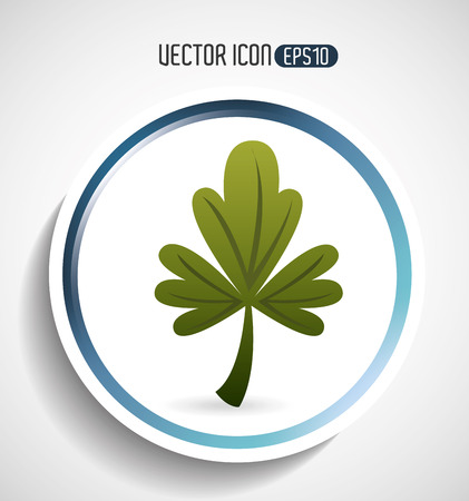 cilantro: corainder leaf design, vector illustration eps10 graphic