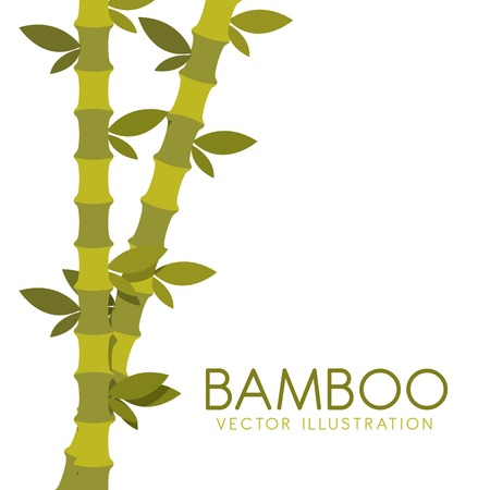 bamboo plant: bamboo plant design, vector illustration eps10 graphic