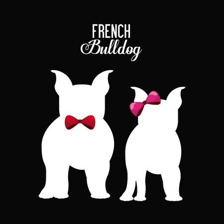 femenine: french bulldog design, vector illustration eps10 graphic Illustration