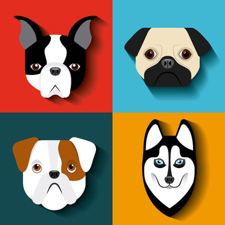 husky puppy: purebred dogs design, vector illustration eps10 graphic