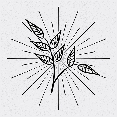 leafs: leafs drawing design, vector illustration eps10 graphic