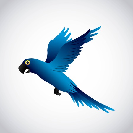 macaw: blue macaw design, vector illustration eps10 graphic Illustration
