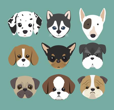 purebred: purebred dogs design, vector illustration eps10 graphic