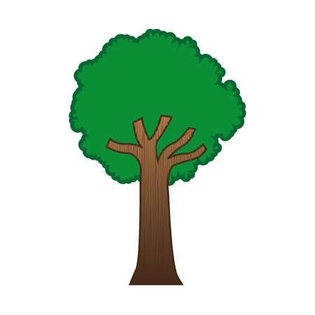 tree isolated: large green tree isolated icon design, vector illustration  graphic
