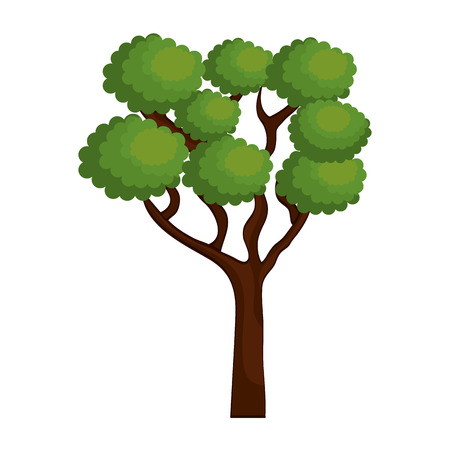 specie: large and leafy tree isolated icon design, vector illustration  graphic Illustration