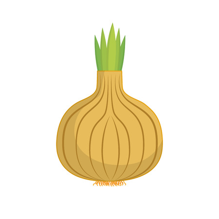 healty food: Fresh vegetable isolated icon design, healty food concept vector illustration.