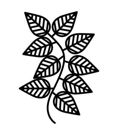 Mint leaves isolated icon design, vector illustration graphic
