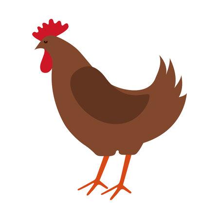 natural cock: chicken farm isolated icon design, vector illustration  graphic