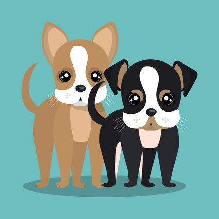 cute puppy: couple breed dogs isolated icon design, vector illustration  graphic