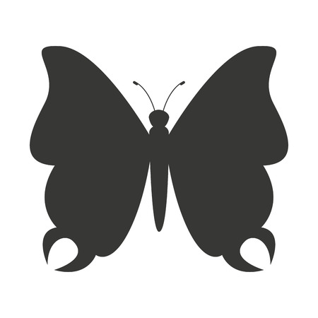 butterfly isolated: beautiful butterfly silhoeutte icon vector isolated graphic