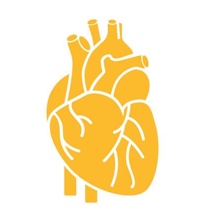 cuore organo umano isolato icona illustrazione vettoriale progettazione