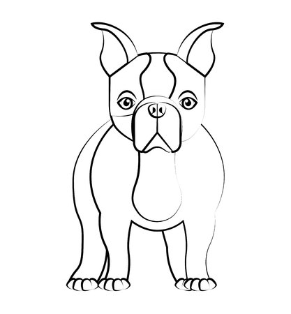 breeds: cute bulldog isolated icon vector illustration design