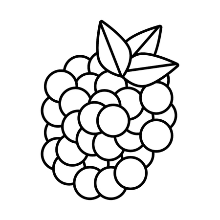 whites: Delicious and fresh grapes fruit, isolated flat icon design vector illustration.