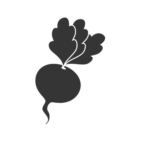 la betterave alimentaire de betterave légume racine graphique vectoriel organique naturel isolé et illustration plat Vecteurs